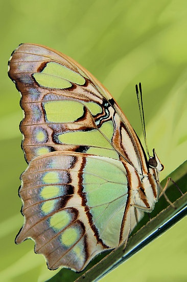 Im Virtuous And Hookup A Haitian Manioc Carveds figure Of Butterflies