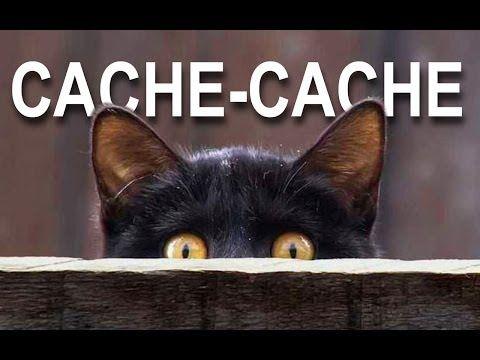 CACHE-CACHE - PAROLE DE CHAT - YouTube