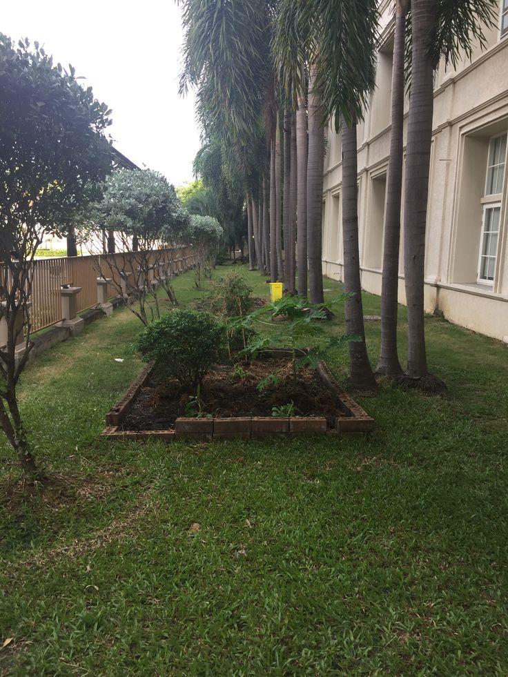 Berkeley International School Garden is looking better all