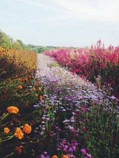 A meadow of beautiful flowers.