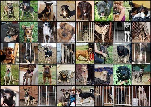 49 psów Czy zostaną oddane do mordowni?