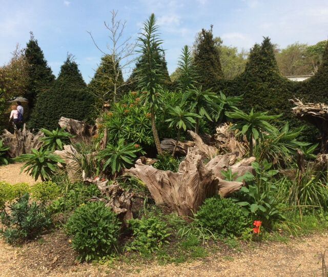 Stumpery in the grounds of Arundel Castle