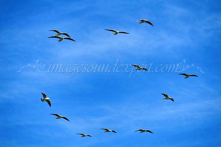 pescarusi, cer albastru