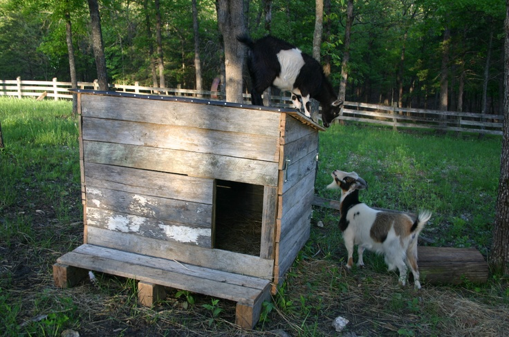 159 Best Images About Backyard Goat Homes On Pinterest