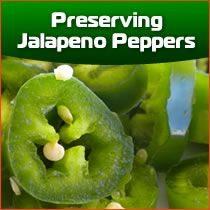 Dried Jalapeno Peppers - Grind them up to make your own jalapeno pepper powder, which is like cayenne powder, or keep them whole and use them as you might use a sun dried tomato. They can be rehydrated with water and go great with any recipe!