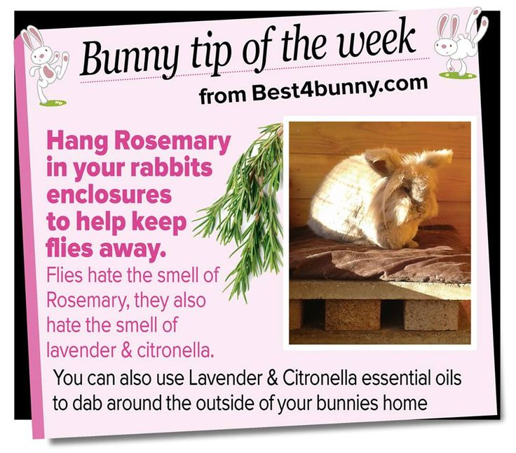 Bunny tip - Hang Rosemary to keep flies away! www.best4bunny.com