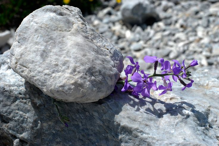 Rock on a flower of violet