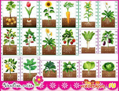 Пазлы овощи, цветы, ягоды