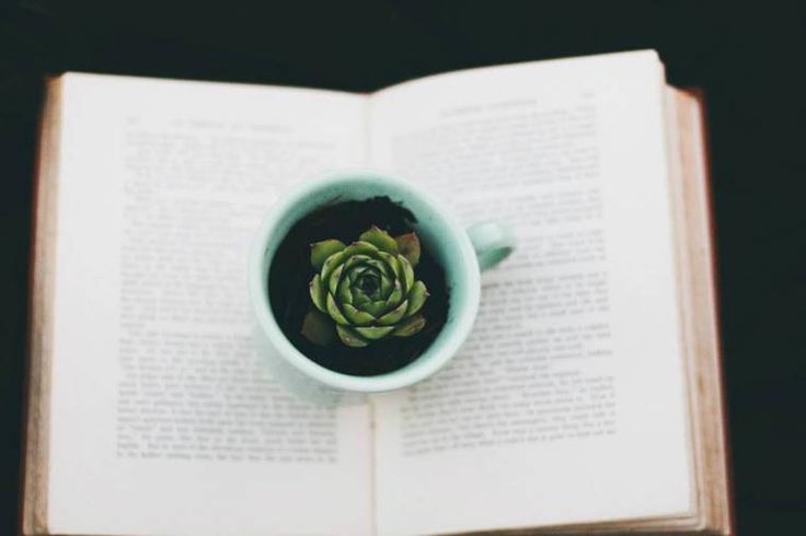 The Once Was // Plant in my Mug