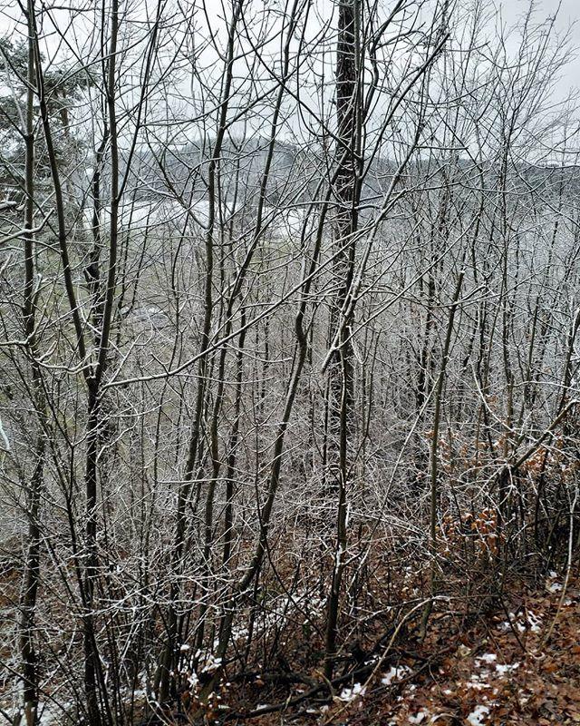 #Winter is back  #Naturmomente #Schwarzbubenland #Solothurn #Nunningen #Schweiz  #photooftheday #magicplaces #kraftorte #switzerland #switzerlandpictures #magicswitzerland  #nature #naturelovers #green #forest