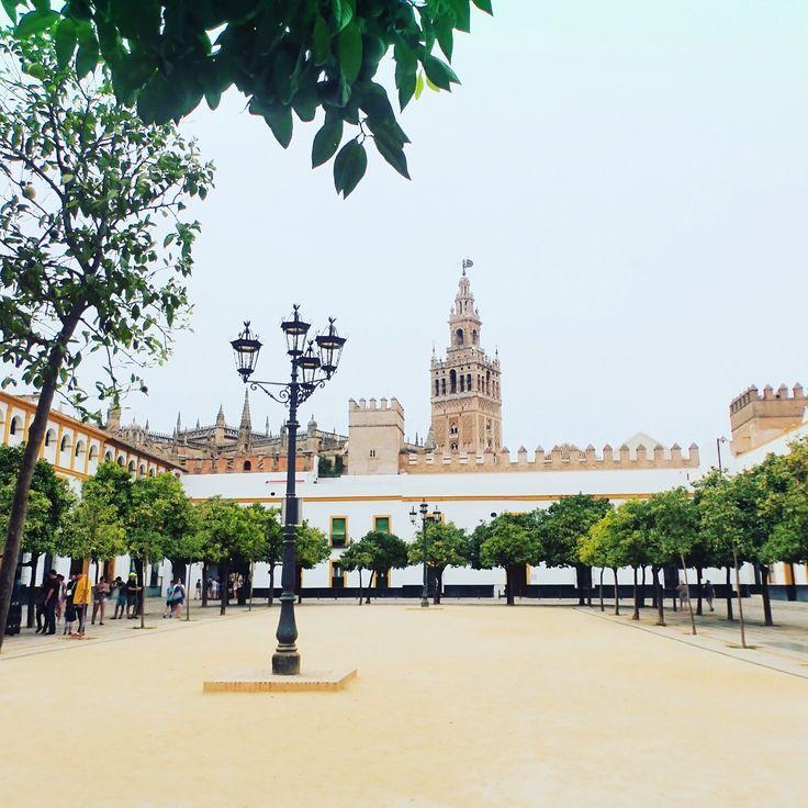 Seville, Spain - Sevilla Cathedral taken from the Patio de Banderas #sevilla #seville #travel #adventures #talestrailsjourneys