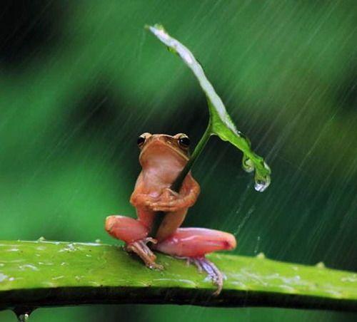 Even frogs use umbrellas.