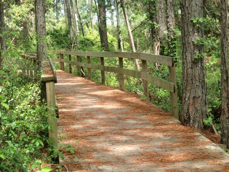 Hammock Hills Nature Trail...Ocracoke Island, Outer Banks North Carolina