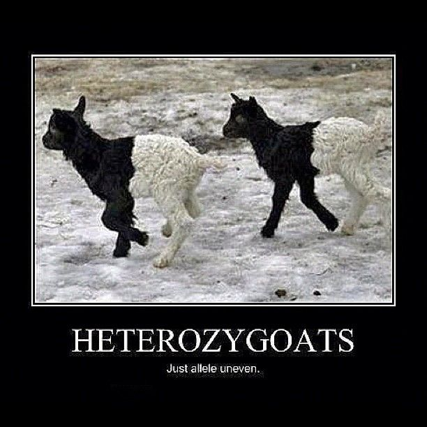 I'm repinning this because, thanks to my biology teacher, I understand this joke.