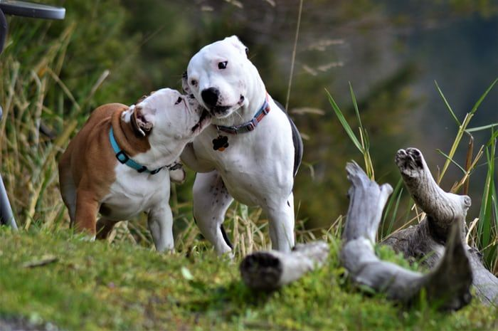 It S Always Fun Watching A Couple Pups Play Do You Like Dogs Be
