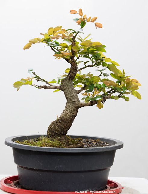 My Bonsai Obsession: Ending Summer on a Positive Note