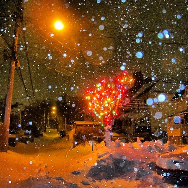 Same pretty tree, different stormy night. Hydrostone North End Halifax Blizzard