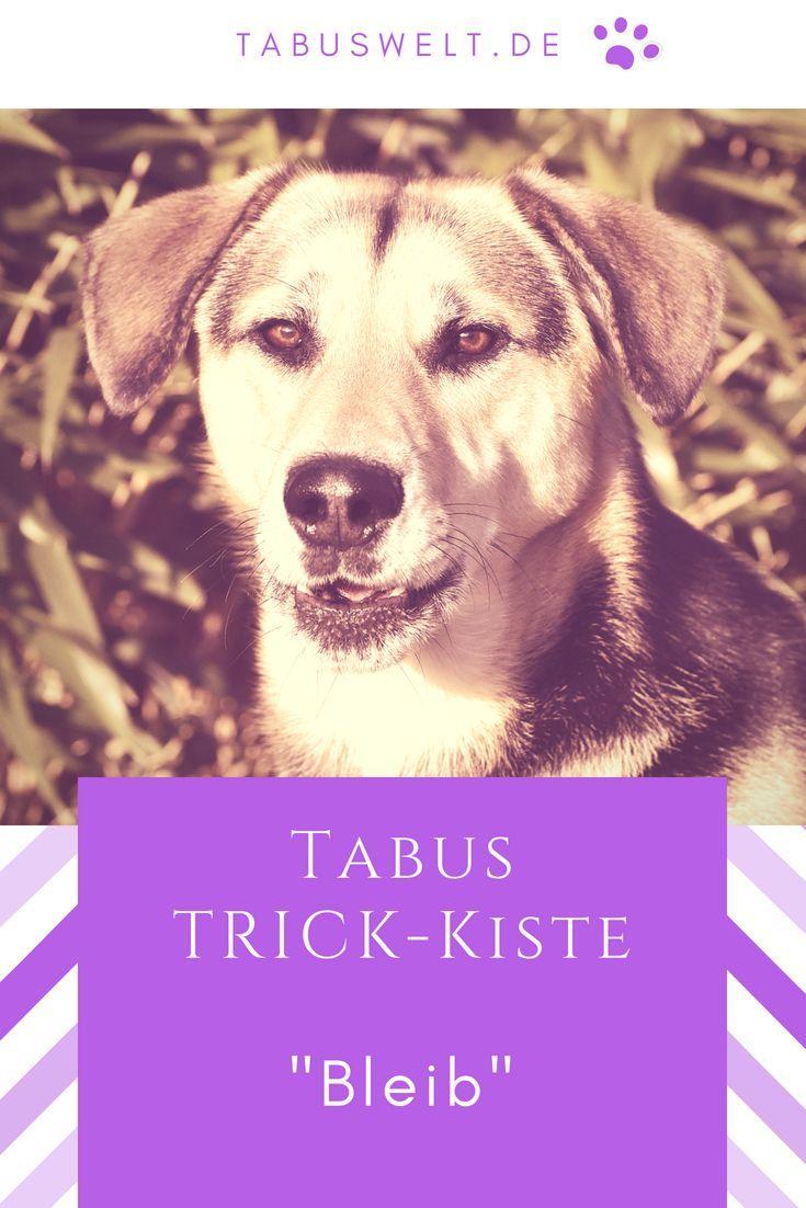Tabus Trick Kiste Bleib Hund Hunde Trick Tricks Tricksen Hundetricks Ideen Tipps Aufbau Leckerli Hundeerziehung Hundehaltung Hundetricks