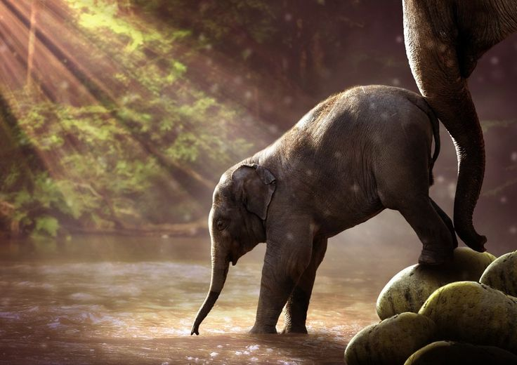 Elephant, baby animal, river wallpaper