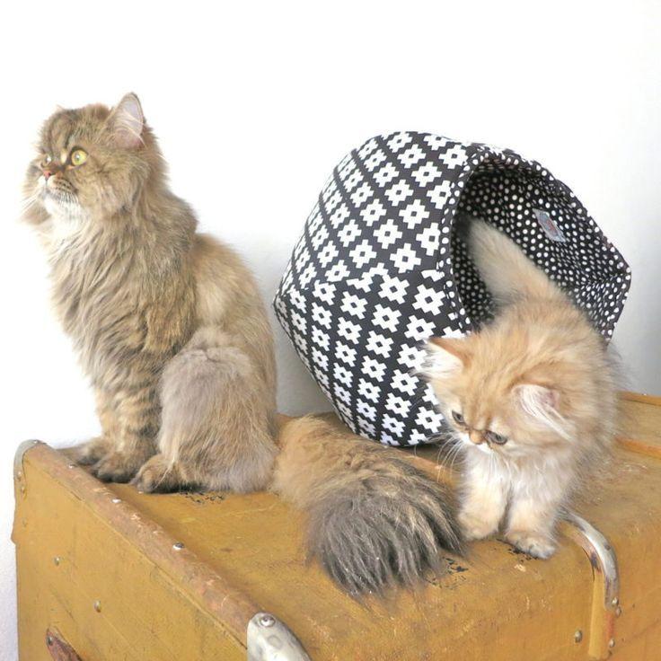 6 Sicherheitstipps Fur Atherische Ole Fur Katzenbesitzer Home