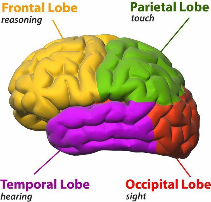 CK-12 Foundation | Central Nervous System
