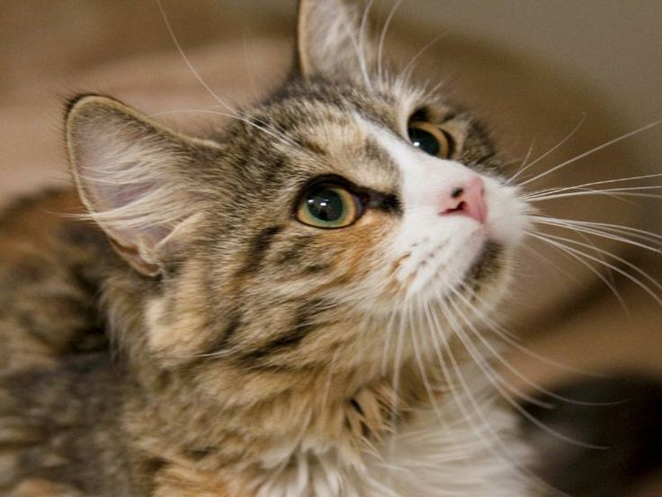 13+ Catawba county animal shelter ideas in 2021