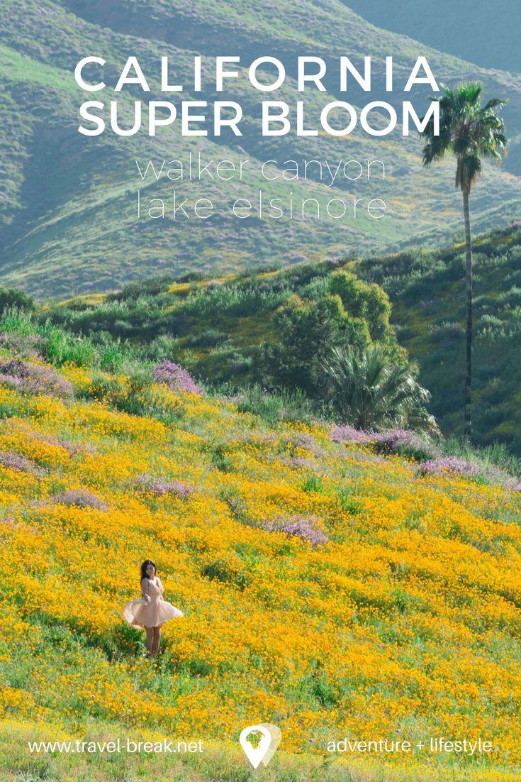 See the poppy fields for the California Super Bloom in Walker Canyon Lake Elsinore    Travel-Break.net via @TravelBreak