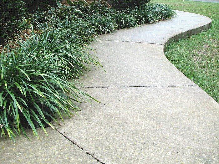 Best 25 grass edging ideas on pinterest landscape for Plants for walkway landscaping ideas