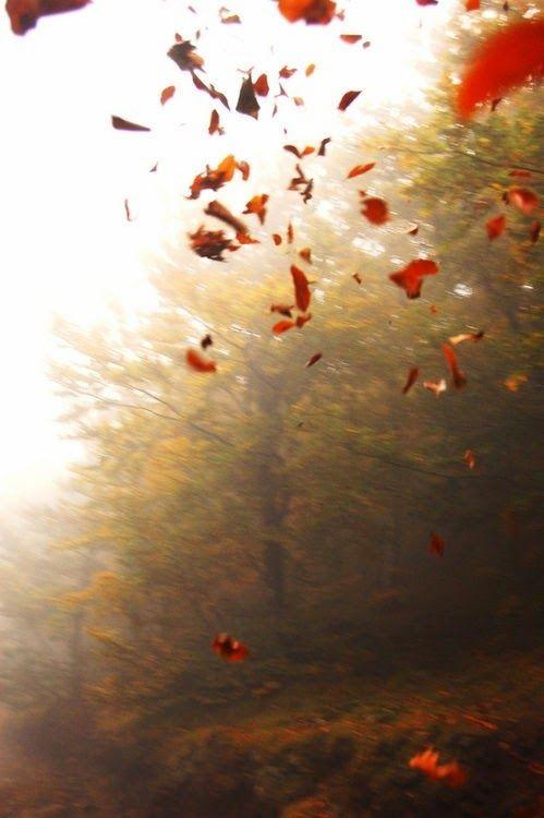 A swirl of falling leaves