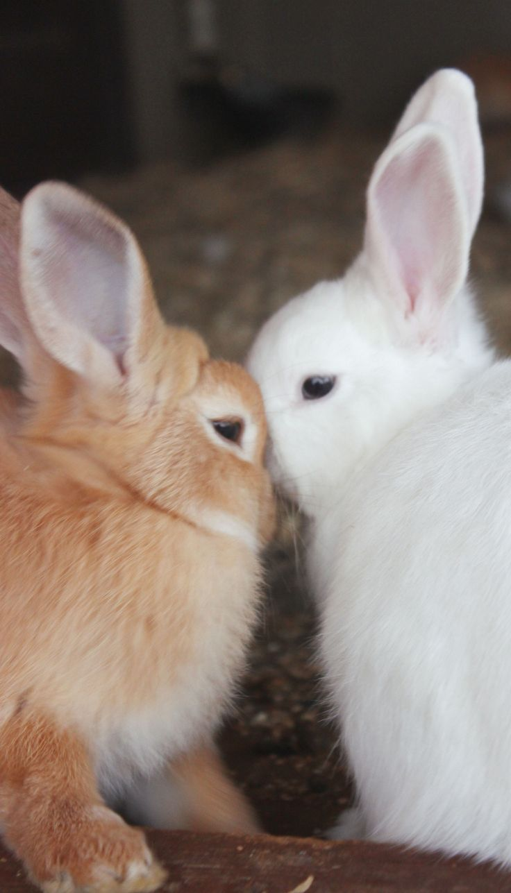 When was a child I had bunnies just like these two, named them Jack and Jill.