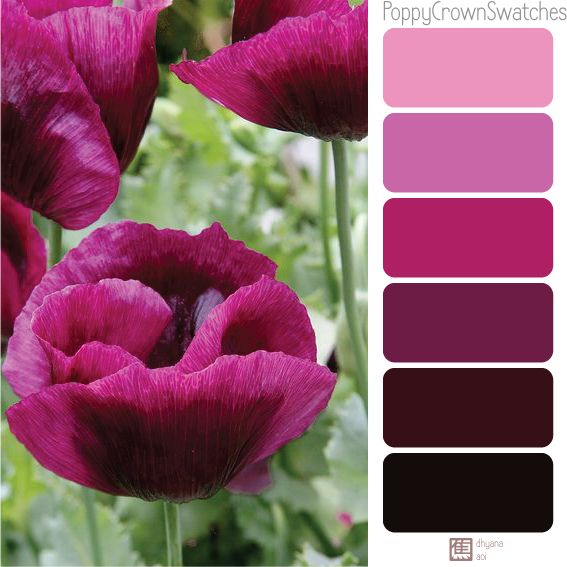 A color swatches that I picked from Lauren's Grape Poppy crown's color. Enjoy!