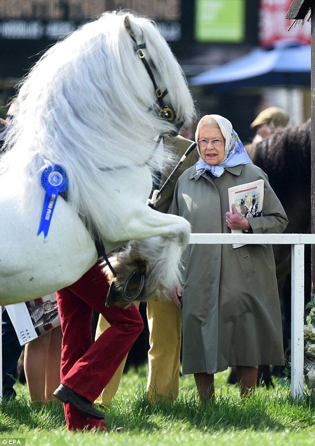 The Queen she met with the runner up of the Shetland Pony Grand National who performed a jump especially for Her Majesty