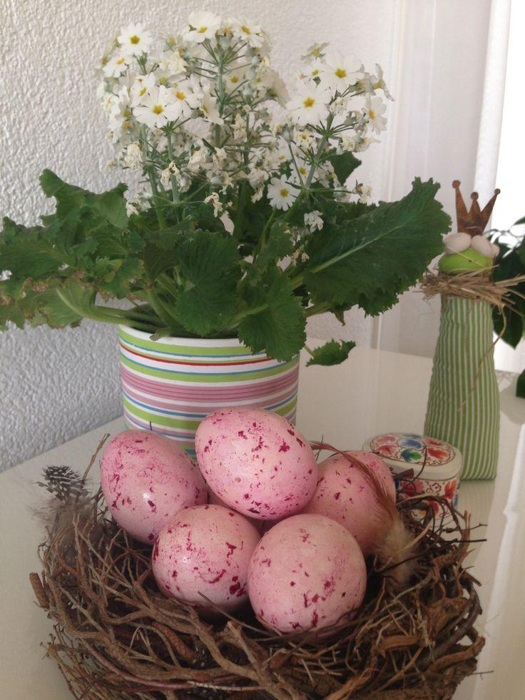 Färben mit Rote Beete Eier hart kochen. Rote Beete mit etwas Essig vermischen und Eier darin wälzen- fertig!