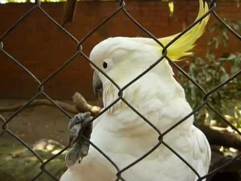 This Cockatoo was at Koala Park Sanctuary in #Sydney #Australia