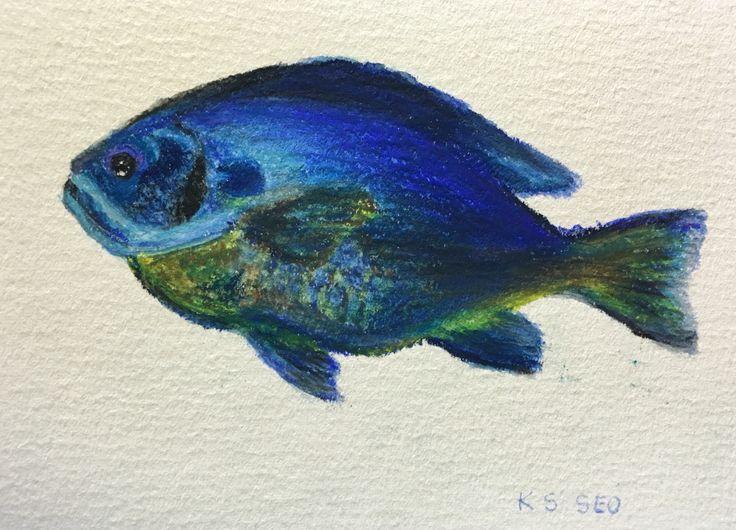 #bluegill