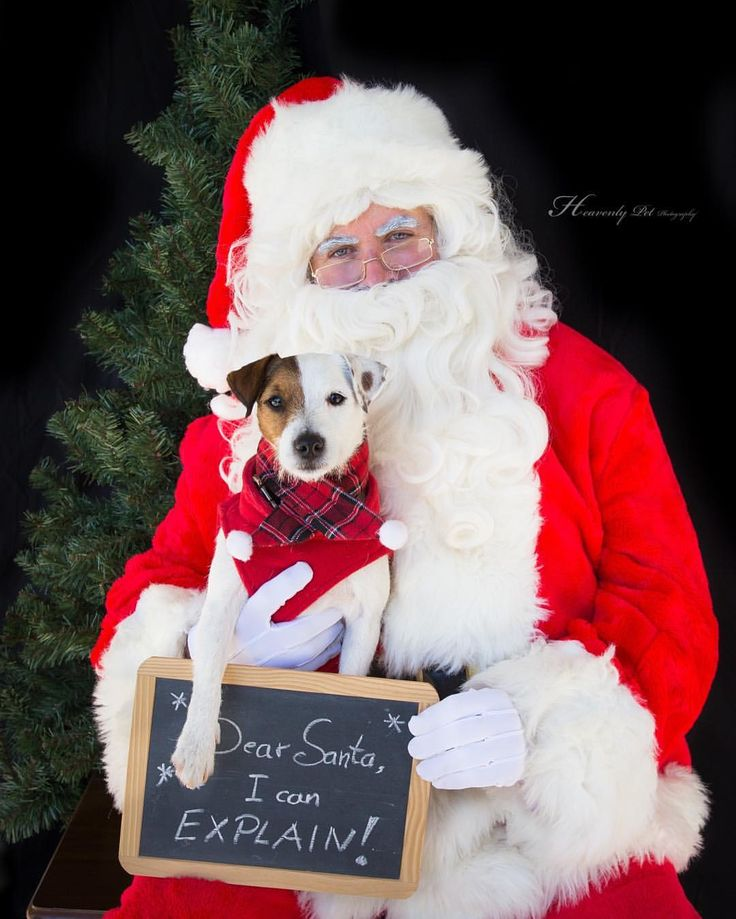Santa Pics at Dog City Sandy Springs by Heavenly Pet Photography #holidays