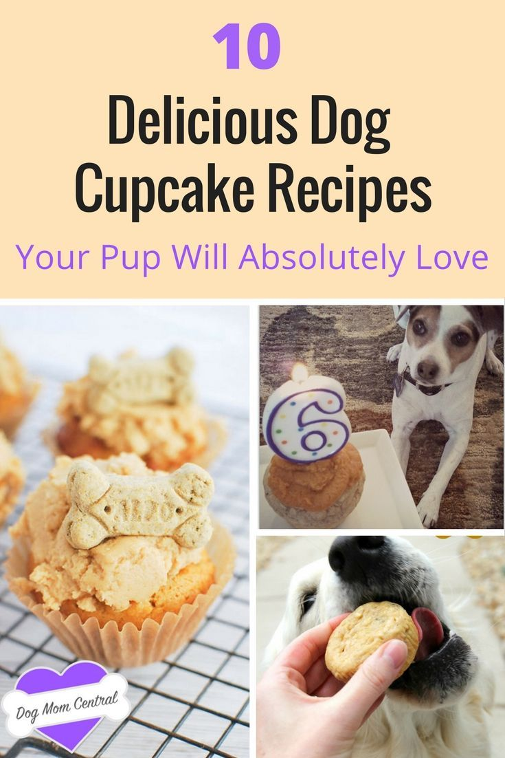 Cupcakes aren't just for humans anymore. Here are the 10 best dog cupcake (also called pupcakes!) recipes you have to try out for your furbaby.