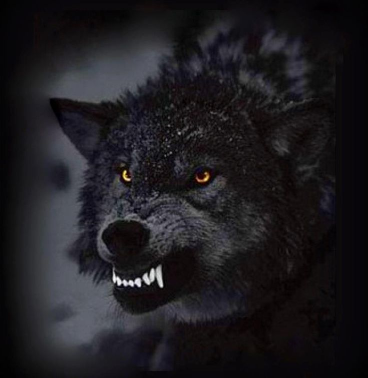 427 Best Images About I Love Wolves On Pinterest