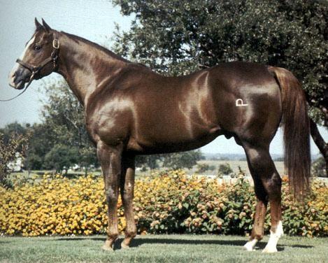 Dash For Cash Quarter Horse  Sorrel Stallion, born 1973  Registry:1238058[American Quarter Horse Association]