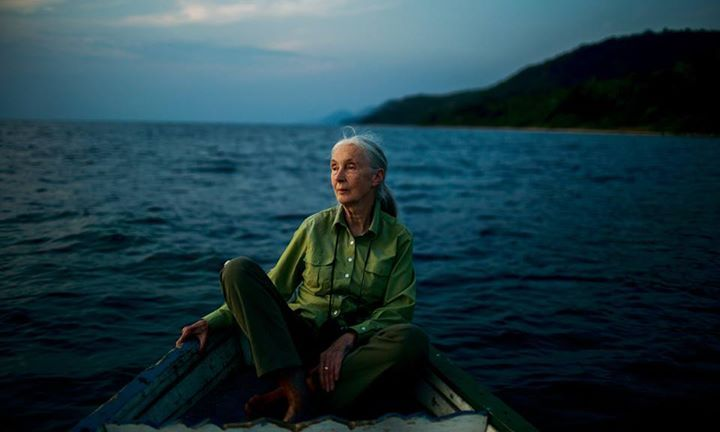 Jane Goodall by Magnum's Michael Christopher Brown
