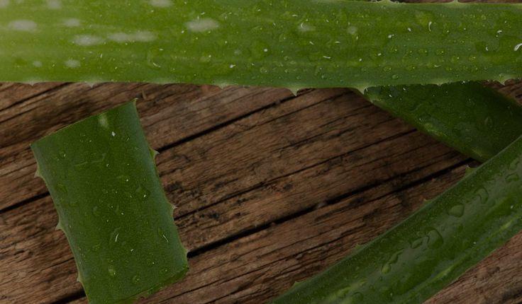 Manufaktura Fresh&Natural produkuje kosmetyki natruralne m.in. peeling, naturalny balsam do ciała, naturalna sól do kąpieli, naturalny olejek do ciała, naturalny balsam do ust, naturalny balsam do dłoni, naturalne masło do ciała, naturalny krem do rąk