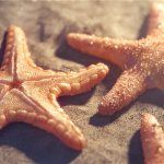 Making of Starfish
