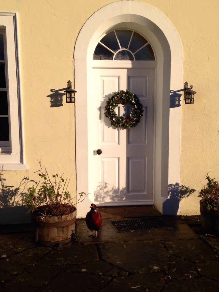 A pleasant pheasant came knocking at the door at Christmas.