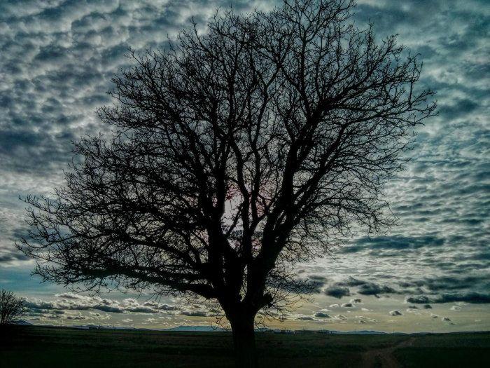 Árbol solitario, en Mascate, Omán