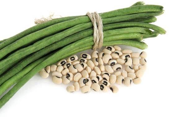 Вигна – это однолетнее растение кустовой или полукустовой формы, вырастающее до 5 м в высоту. Плоды вигны представляют собой узкие удлиненные (до 1 м) стручки светлого цвета с небольшими семенами-бобами внутри