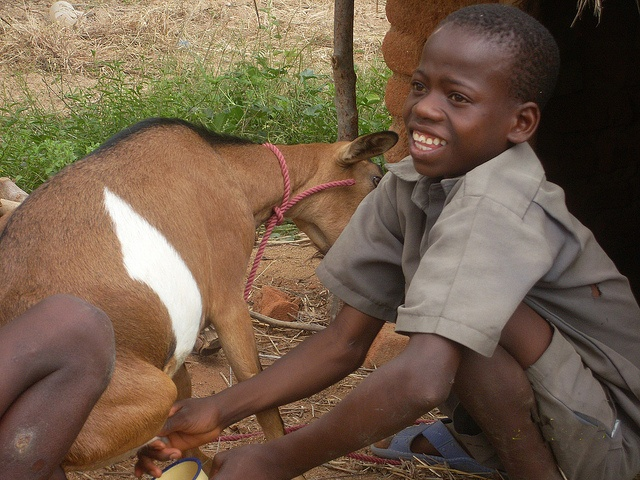 Friday mjölkar sin get.  En get kan få 4 killingar om året.Det blir snabbt en hel hjord som både ger näringsrik mjölk och en inkomst.  Ge bort en get på: www.gladjeshoppen.se  #get #gebortenget #gladjeshoppen