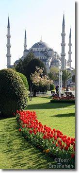 Sultanahmet (Blue) Mosque & Tulips, Istanbul, Turkey