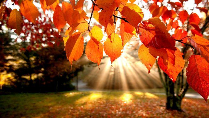 Liście, park, jesień