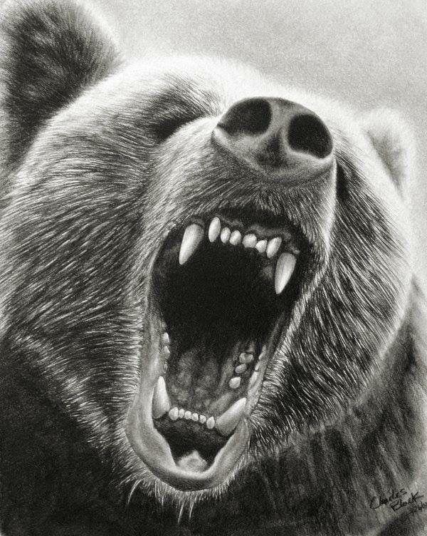 сохранила память оскал белого медведя картинки россии биатлон поставлен