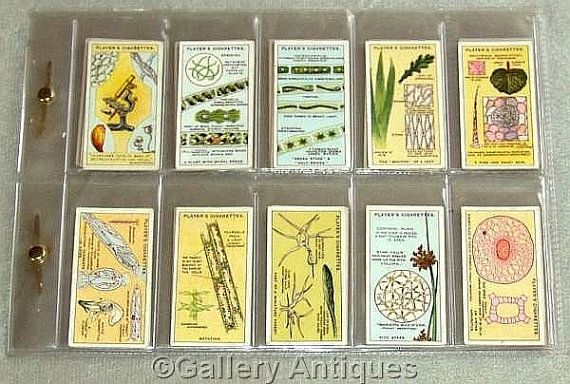 Antique Vintage Hidden Beauties Full complete set Series of 25 Cigarette Cards in Sleeve by John Player & Sons Issued in 1929 (ref: 4058)